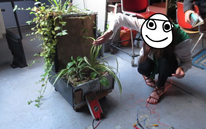 orgue_plante